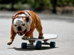 skater dogs